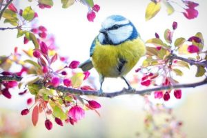 Spring into Well-being | Inner Balance Health Group